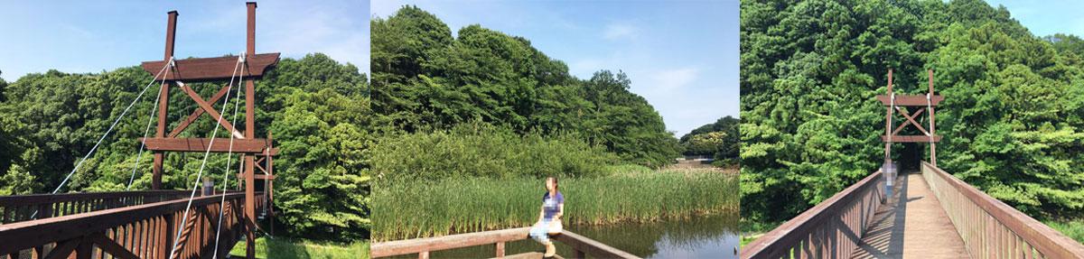 大和市 泉の森 吊り橋