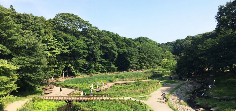 大和市 泉の森