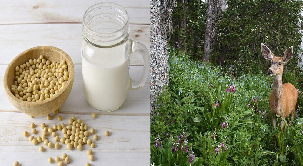 節分豆と花粉症