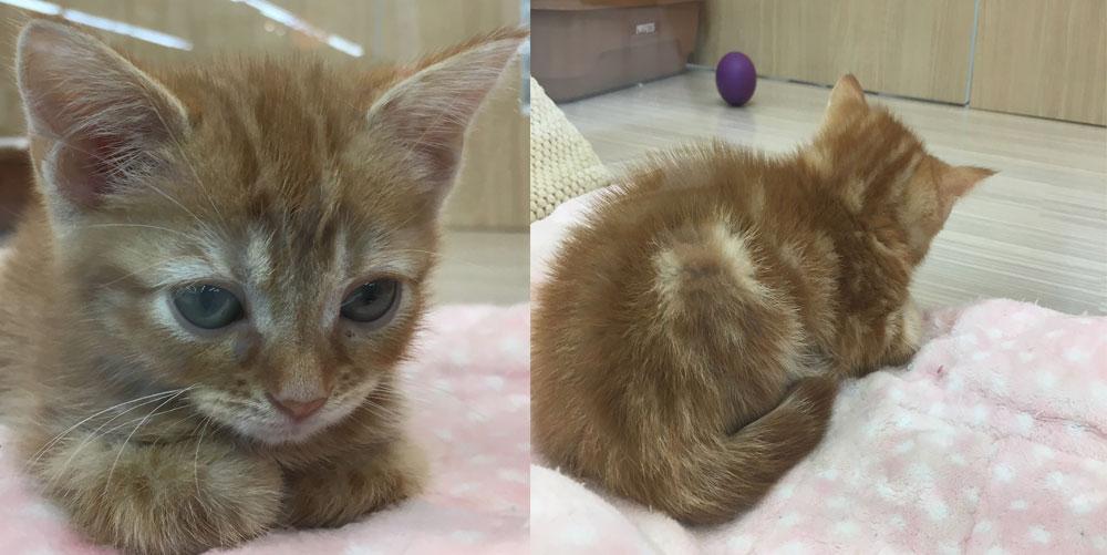 ペットショップの眠そうなお顔の猫