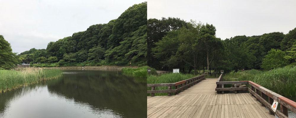 大和市「泉の森」