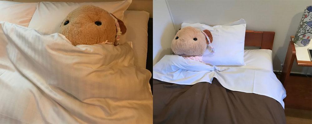 宿泊先で眠るミミちゃん