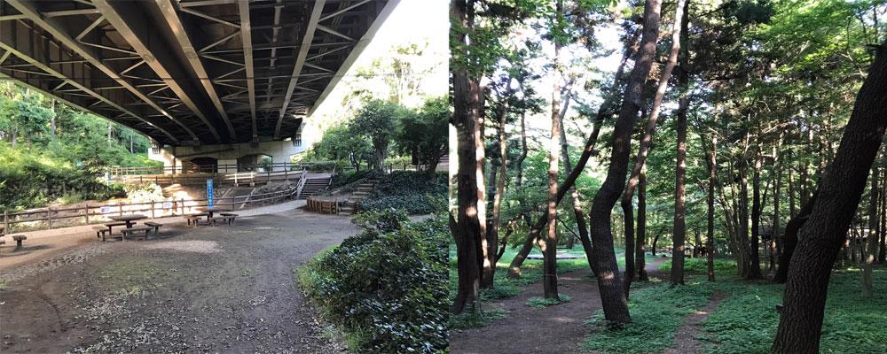 国道246号線の真下と森林