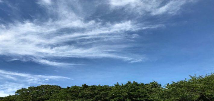 泉の森と青空