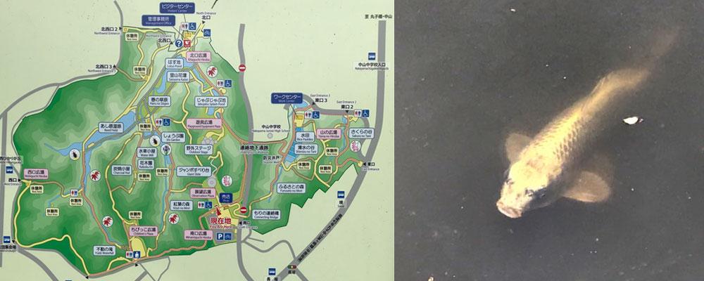 四季の森i公園内マップと人面魚